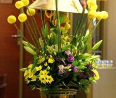 Dianthus-Flowers-Gallery-CruiseShips-11
