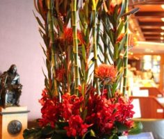 Dianthus-Flowers-Gallery-CruiseShips-3