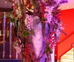 Dianthus-Flowers-Gallery-CruiseShips-5
