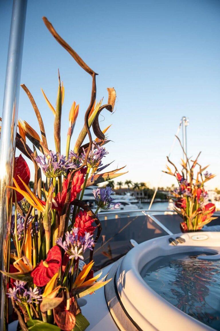 Dianthus Miami - Homepage
