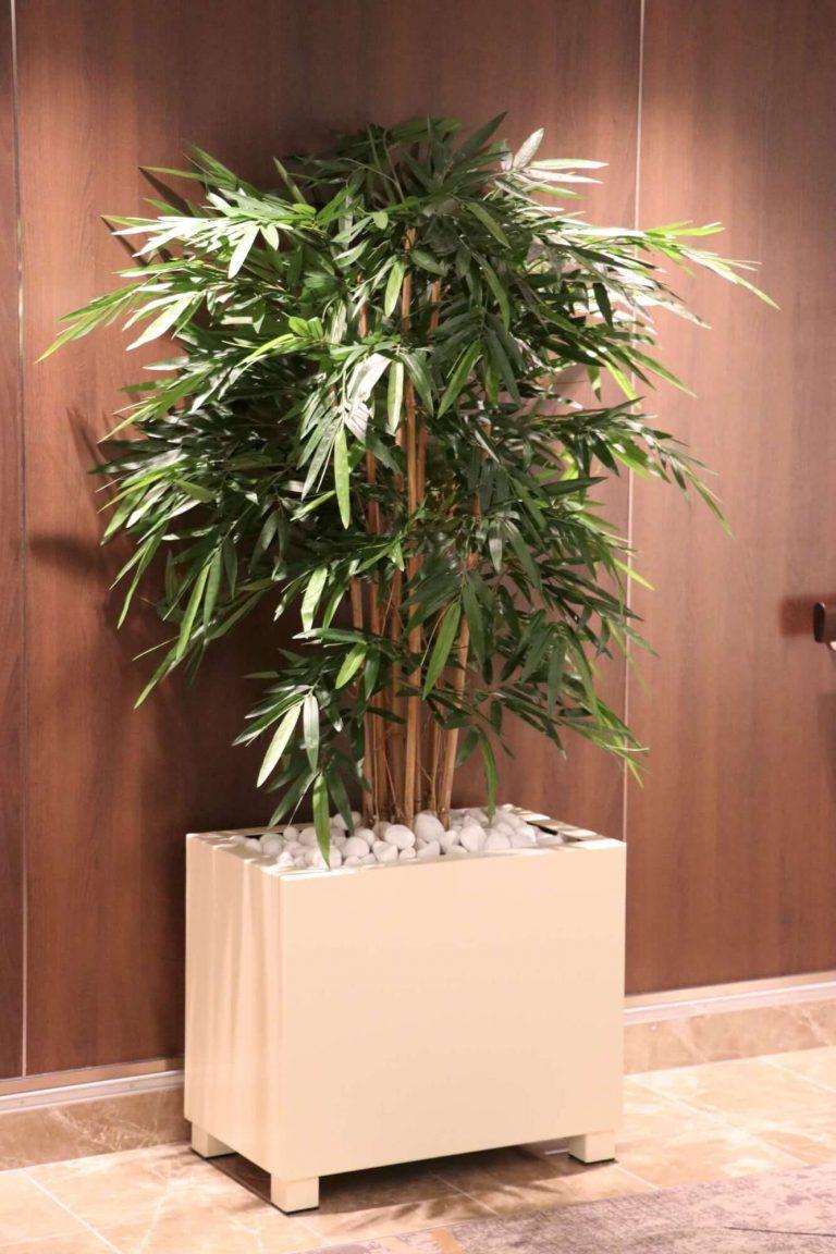 Interior & Exterior Plants Miami